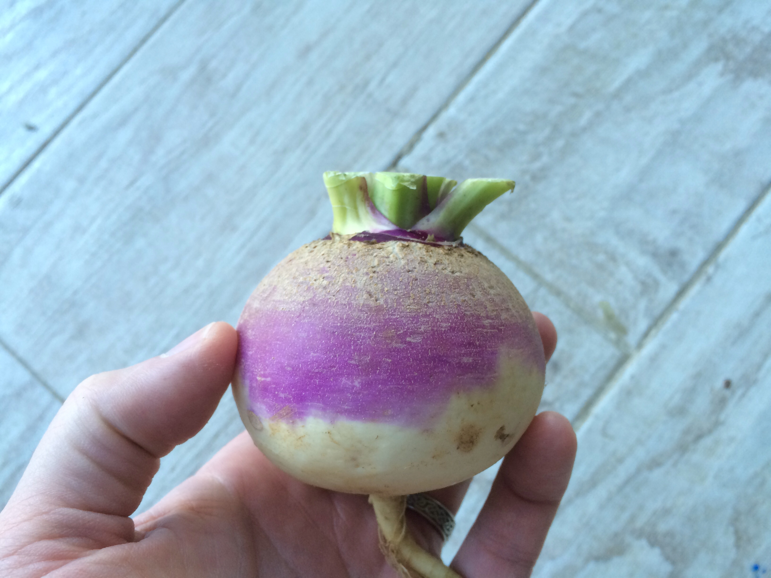 The Eastham Turnip and a Turnip Fluff Recipe